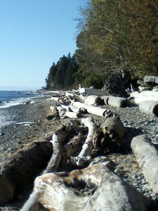 RC Beach 539